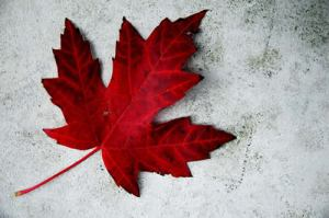 red, maple leaf