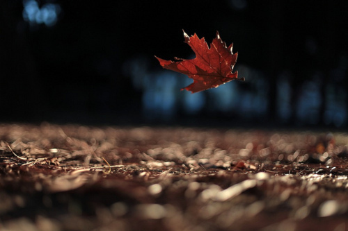 air-autumn-falling-leaf-leaves-photography-Favim.com-74836_large